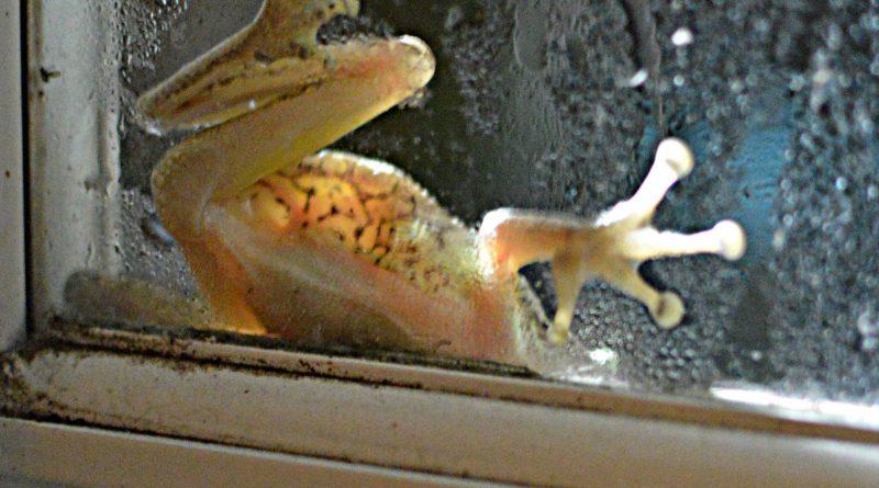 frog on window raining outside
